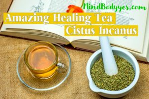 The New Miracle Tea: Cistus Incanus Even More Benefits Than Green Tea